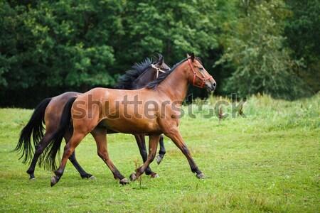 работает лошади зеленый области лет время Сток-фото © castenoid