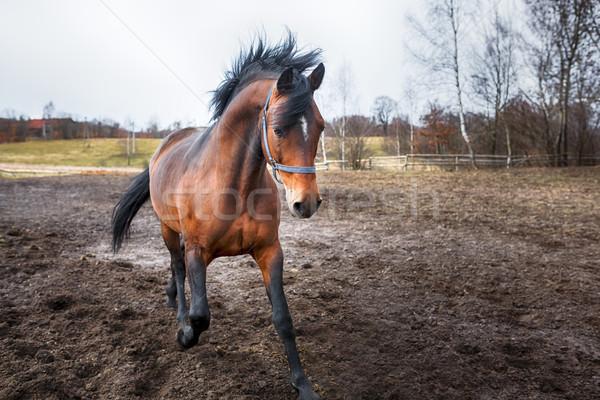 работает лошади грязные области весны время Сток-фото © castenoid