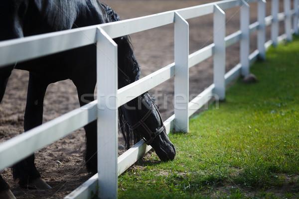 лошади еды зеленая трава забор волос красоту Сток-фото © castenoid