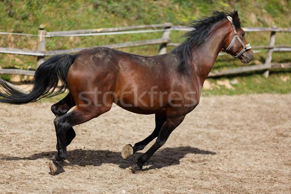 работает лошади грязные области лет время Сток-фото © castenoid