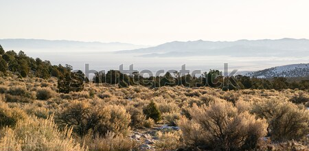 Looking Down Mountain Into Great Basin Nevada Desert Southwest Stock photo © cboswell