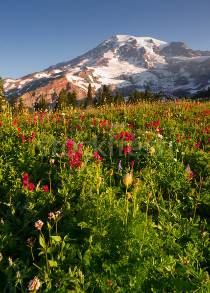 Kaskada parku górskich raj łące Zdjęcia stock © cboswell