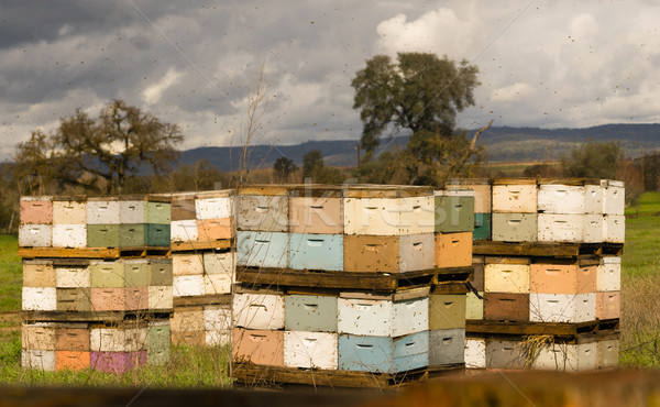 Cases abeille colonie ferme domaine abeilles Photo stock © cboswell