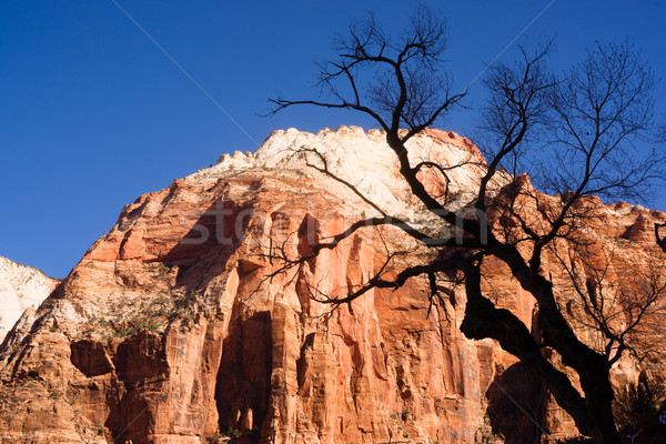 Leafless Tree Silhouette Contrast Against Red Rock Desert Mesa Z Stock photo © cboswell