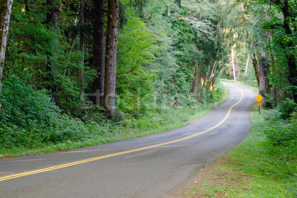 Two Lane Road Cuts Through Dense Tree Canopy Hoh Rainforest Stock photo © cboswell