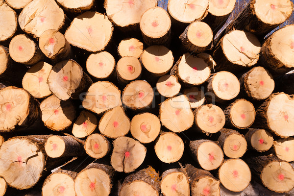 Trees Logs Sit Stacked Northern Minnesota Logging Operation Stock photo © cboswell