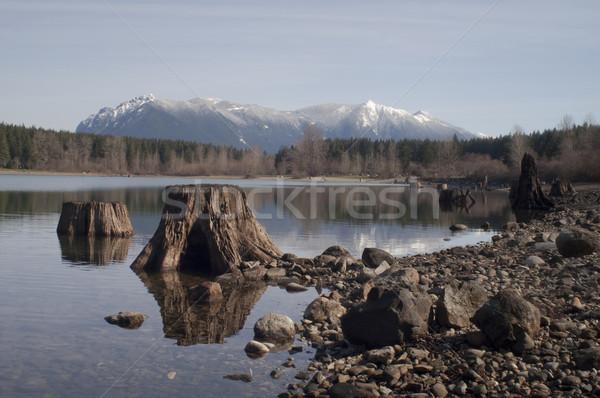 Tree Stumps Rattlesnake Lake Mount SI North Cascade Mountains Stock photo © cboswell