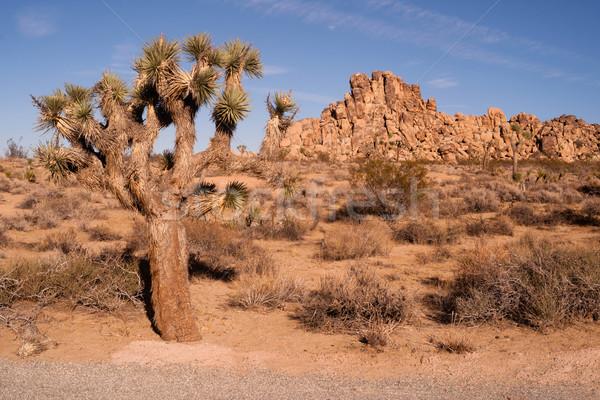 дерево горная порода пейзаж Калифорния идеальный день Сток-фото © cboswell