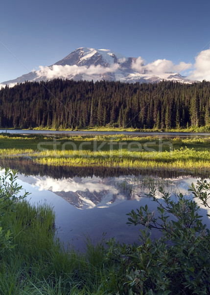 Saturated Color at Reflection Lake Mt. Rainier National Park Ver Stock photo © cboswell