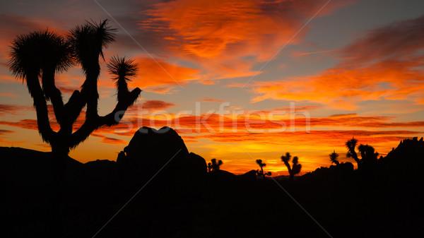 Joshua Tree Sunset Cloud Landscape California National Park  Stock photo © cboswell