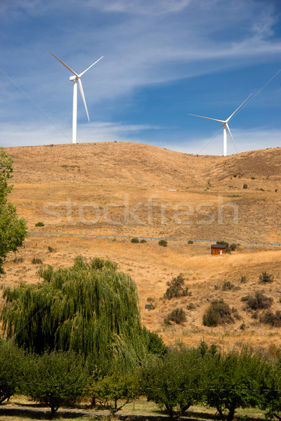 Green Energy Wind Generators Dot Landscape Eastern Washington Stock photo © cboswell