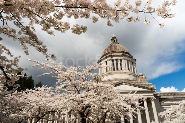Washington State Capital Building Olympia Springtime Cherry Blos Stock photo © cboswell