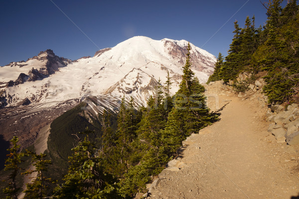 Trail High on Burroughs Mountain Cascade Range Mt. Rainier Backg Stock photo © cboswell