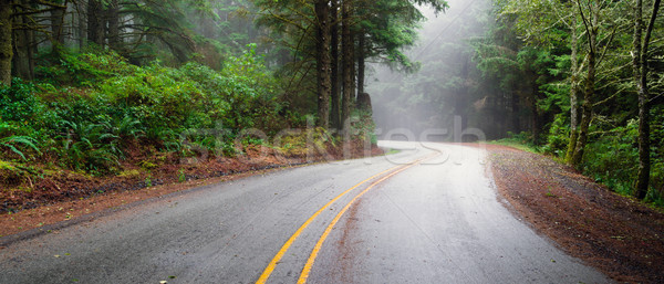 Misty Forest Two Lane Highway Rural Country Coastal Road Stock photo © cboswell