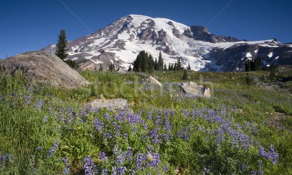 Majestic Snowcapped Mountain Peak Mt. Rainier Wildflowers Cascad Stock photo © cboswell
