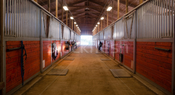 Center Path Through Horse Paddock Equestrian Ranch Stable Stock photo © cboswell