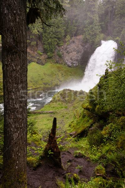 Sahalie Falls McKenzie River National Recreation Trail Nature La Stock photo © cboswell