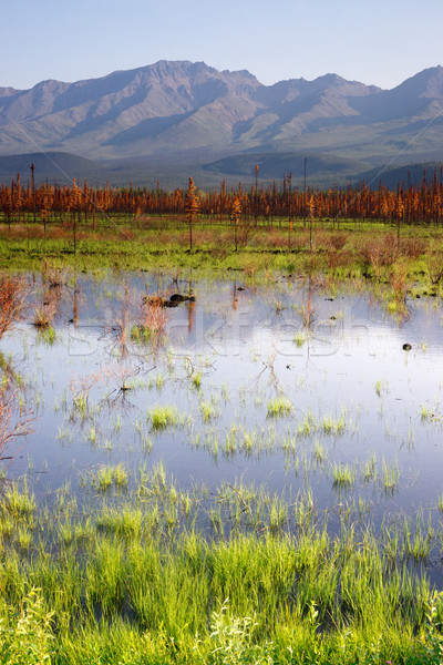 Scenic Marsh Water Panoramic Mountain Landscape Outback Alaska Stock photo © cboswell