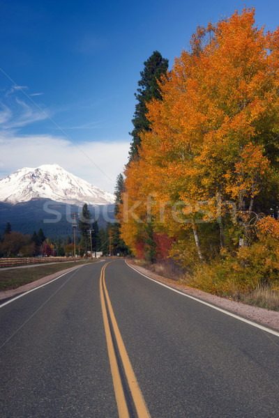 Autumn Finds Foliage Rural Road McCloud California Mount Shasta Stock photo © cboswell