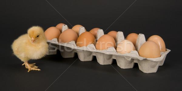 Chicken & A Dozen Eggs Stock photo © cboswell