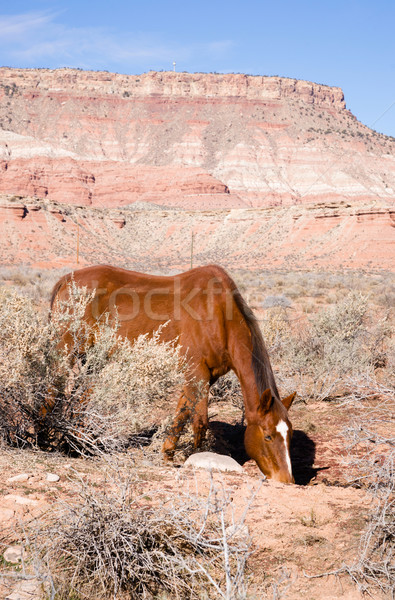 Vertical Composition Scenic Desert Southwest Landscape Animal Li Stock photo © cboswell