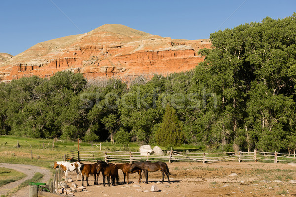 Corralled Horses Wyoming Badlands Ranch Livestock Animals Stock photo © cboswell