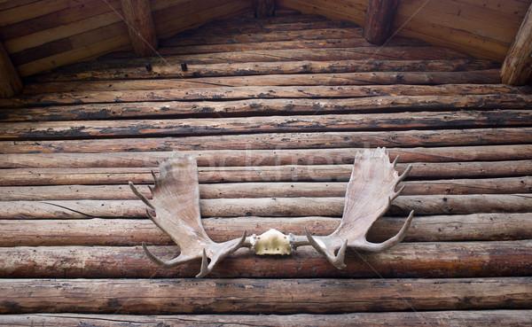 Eland gewei deuropening huis structuur rustiek Stockfoto © cboswell