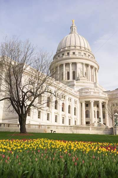 Wisconsin Capital Building Landscaped Grounds Tulip Flowers Stock photo © cboswell