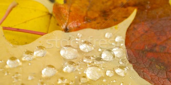 露 水 滴 値下がり 秋 ストックフォト © cboswell