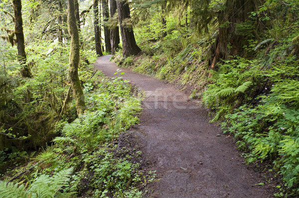 Trail to Punch Bowl Falls Oregon Forest Northwest Stock photo © cboswell