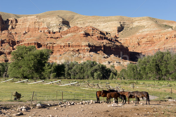 Corraled Horses Wyoming Badlands Ranch Livestock Animals Stock photo © cboswell