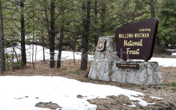 Fresh snow stands around the sign at Wallowa-Whitman National Fo Stock photo © cboswell