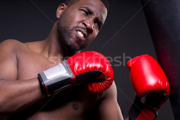 Boxer Stock photo © cboswell