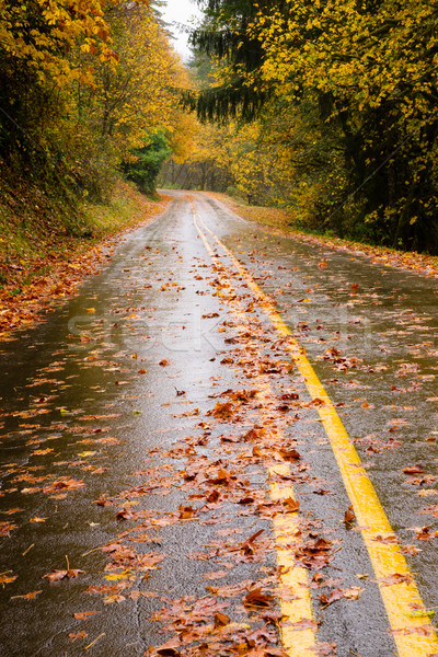 Wet Roadway Covered in Fall Leaves Autumn Highway Stock photo © cboswell