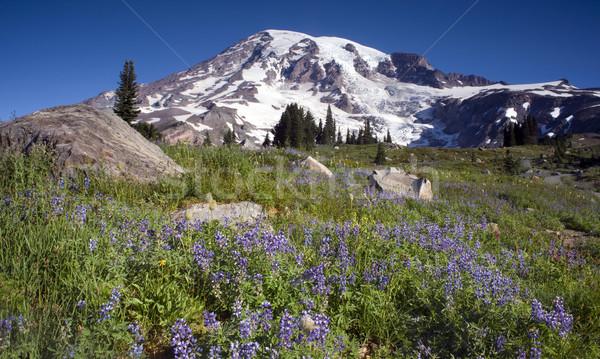 Stock photo: Mt. Rainier and Wildflowers in Bloom
