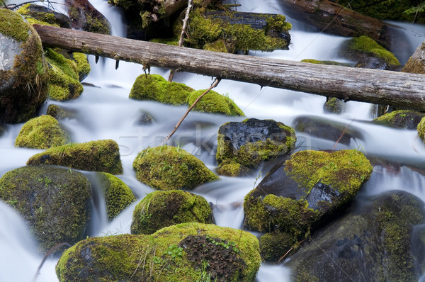 Moss Filled Boulders Fill Stream as Water Rushes By Stock photo © cboswell