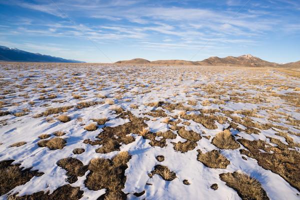 Winter Tundra Desert Landscape Great Basin Area Western USA Stock photo © cboswell