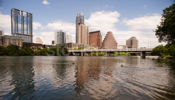 Dogs Swimming playing Colorado River Downtown Austin Texas Stock photo © cboswell