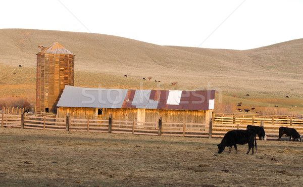 Sunset Rural Hills Cattle Ranch Farm Agriculture Barn Silo Stock photo © cboswell