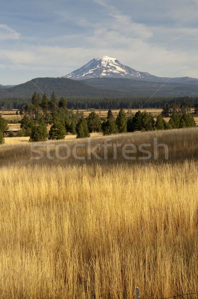Golden Grassland Countryside Mount Adams Mountain Farmland Lands Stock photo © cboswell