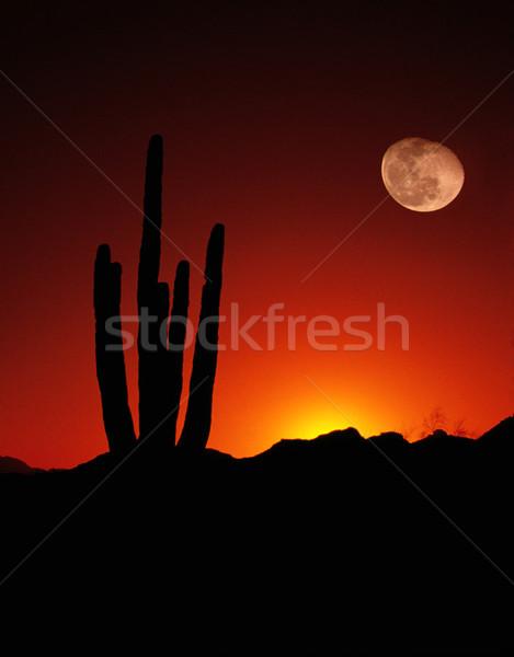 Vertical deserto cacto lua cheia pôr do sol americano Foto stock © cboswell