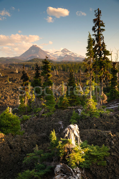 Mckenzie Pass Three Sisters Cascade Mountain Range Lava Field Stock photo © cboswell