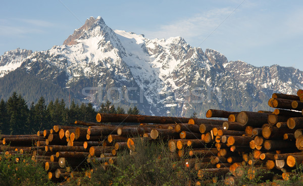 Logging Camp Whithorse Mountain Darrington Washington Stacked Lo Stock photo © cboswell