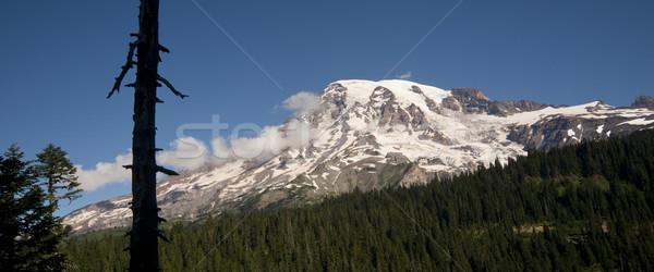 Horizontal Composition Mt. Rainier Dense Forest Cascade Range Wa Stock photo © cboswell