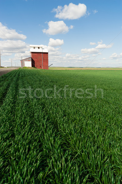 Red Grain Elevator Blue Skies Agriculture Green Crops Field Stock photo © cboswell