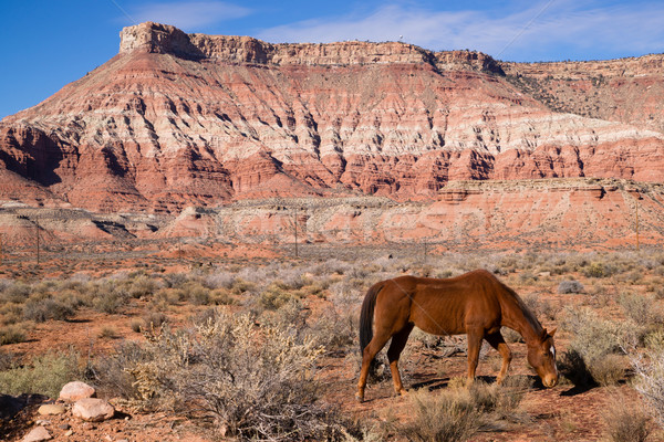 Paard woestijn zuidwest canyon mooie Stockfoto © cboswell