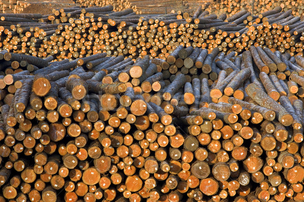 Lumber Mill Log Pile Stock photo © cboswell