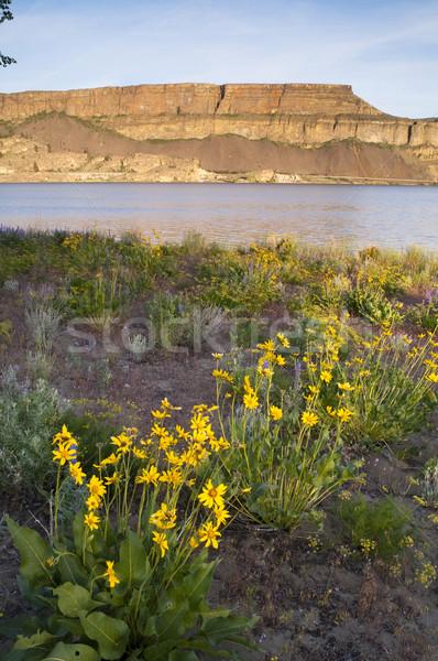 Wildflowers Around Banks Lake Steamboat Rock State Park Stock photo © cboswell