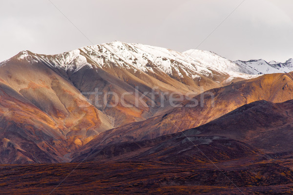 Fall Color Snow Capped Peak Alaska Range Fall Autumn Season Stock photo © cboswell