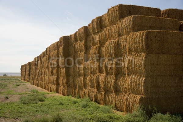 Hay Bales in Huge Stack on Corner of Farmers Field Farm Staple Stock photo © cboswell